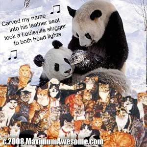 panda lesbian on sea of kittens cats singing carrie underwood