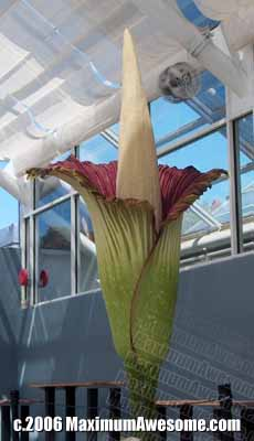 titan arum corpse flower